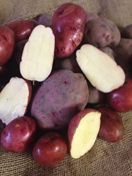 Seed Potato, Red Lasoda, (5 Lbs.), Certified Minnesota Grown Red Lasoda