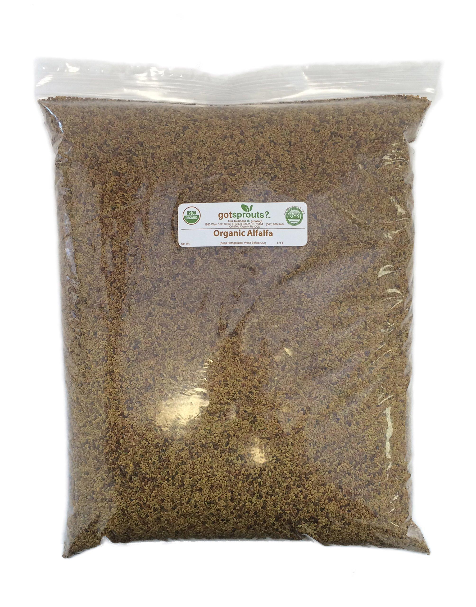 10 LBS Organic Alfalfa Seeds