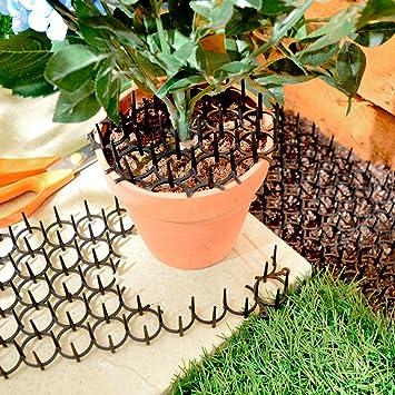 Pantalla de protección contra espinas Espinas planta de pájaro de gato repelente disuasorio 2pk: Amazon.es: Jardín