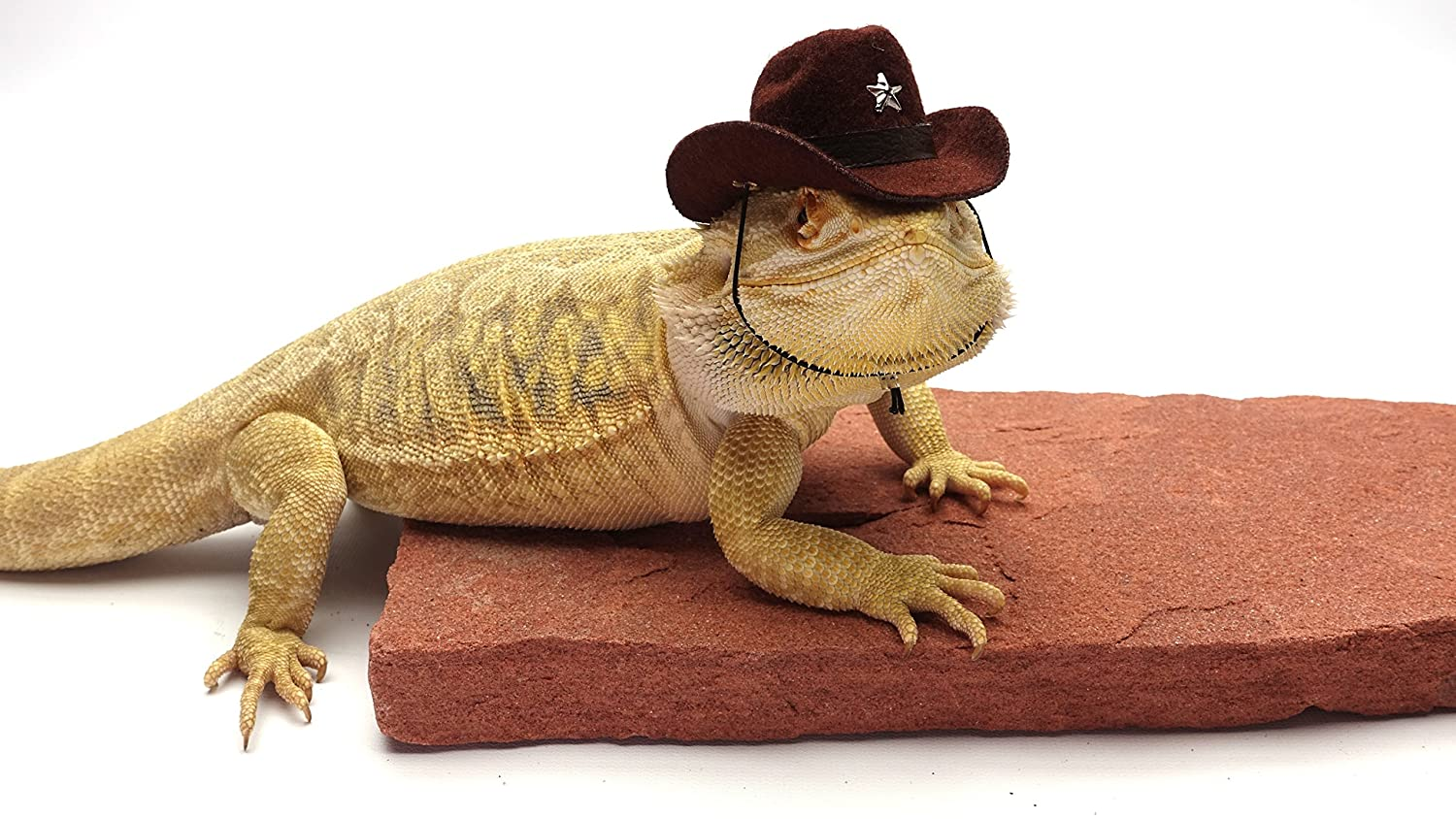 e4dfa7522db Amazon.com   Carolina Designer Dragons Bearded Dragon Cowboy Hat ...