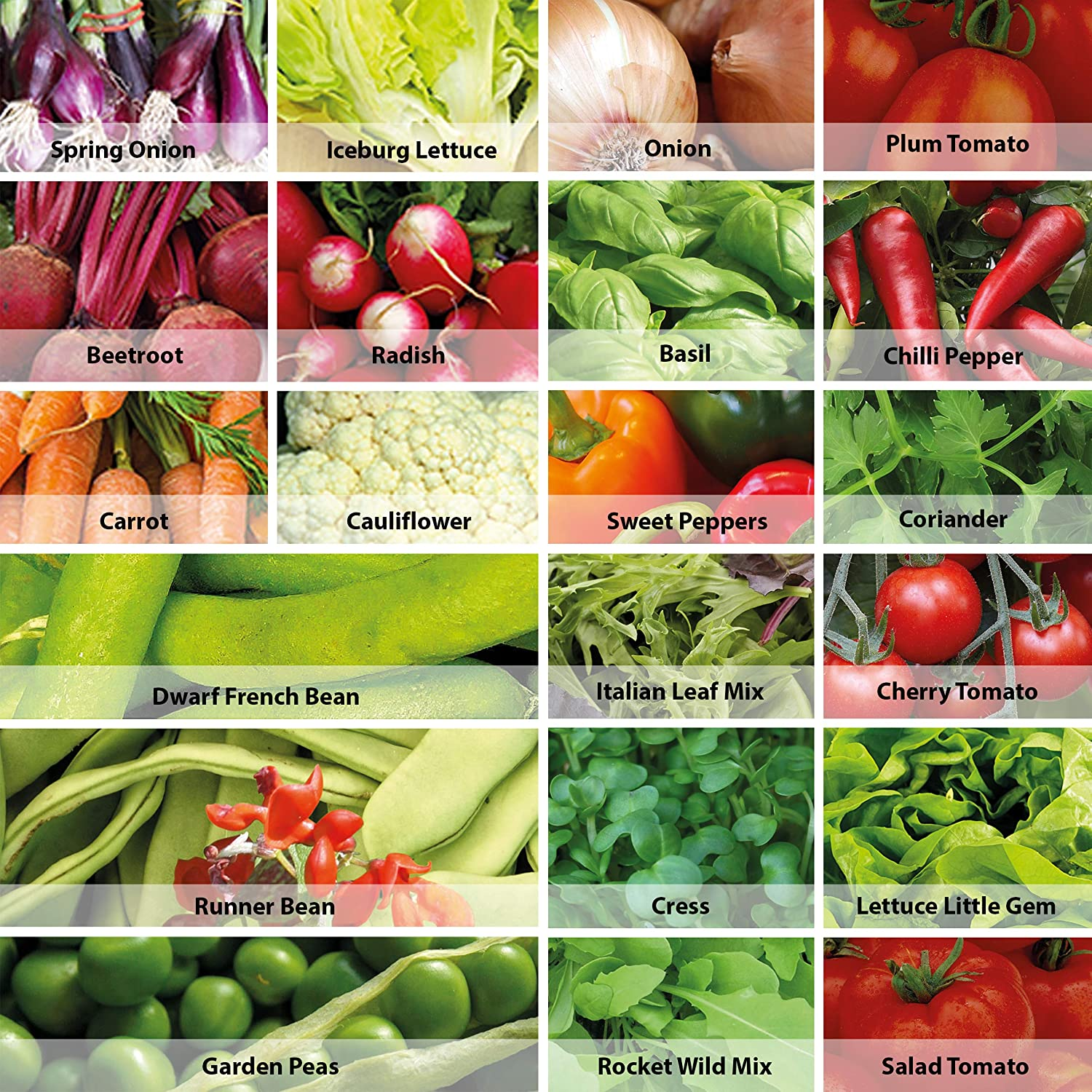 Vegetable seeds tomato carrot cucumber peppers onions beetroot radish and more