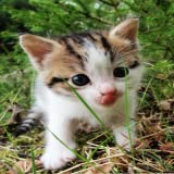 Cute Cats live Wallpapers