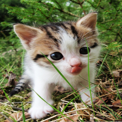 cute-cats-live-wallpapers