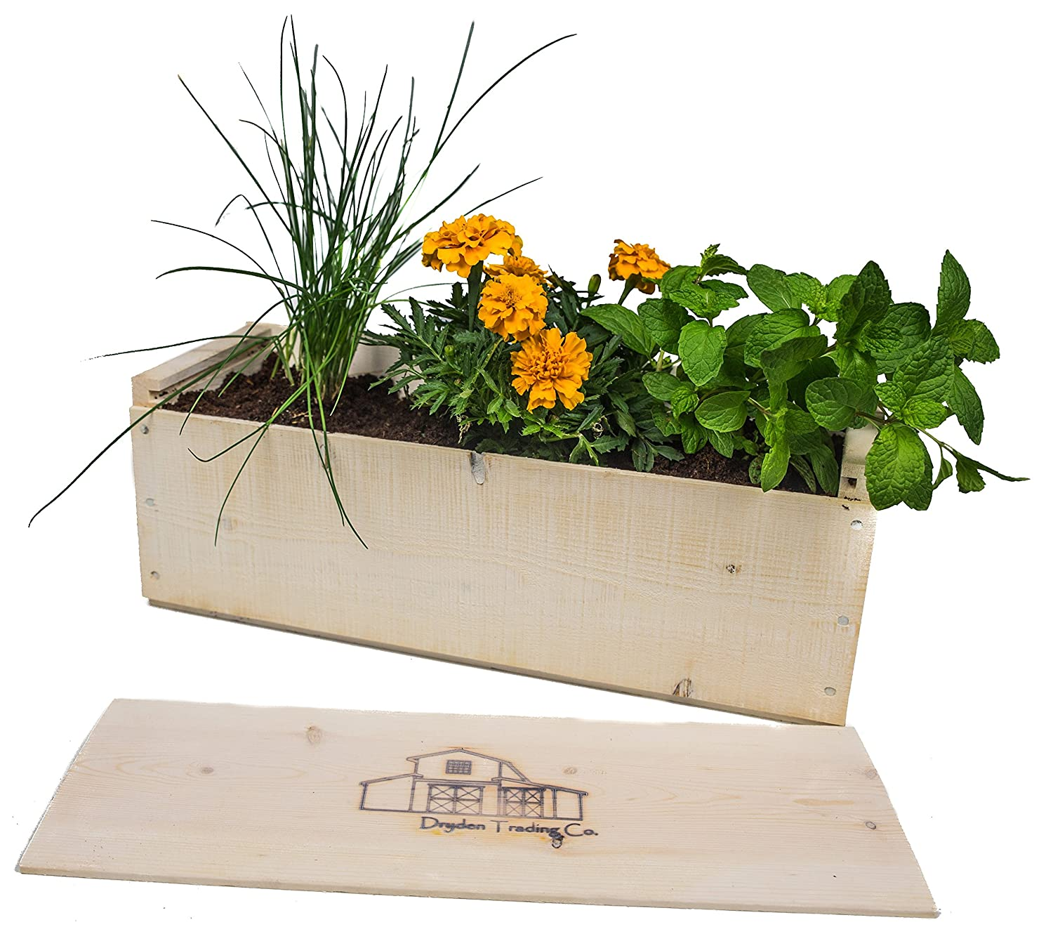 Indoor Herb Garden Planter Box Kit with Basil, Cilantro, Oregano,