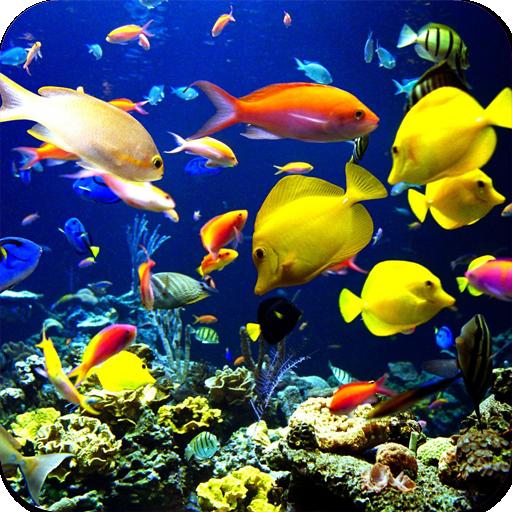 Magical Underwater Wallpapers