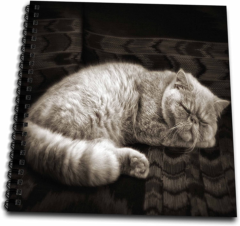 "Doreen Erhardt猫 – SweetセピアToned Persian Cat Sleeping。 – Drawing Book 8"" x 8"" db_150183_1"