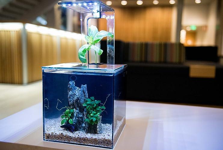 ecoqube aquarium desktop aquarium kit for betta fish office decor and home decor office desk aquarium