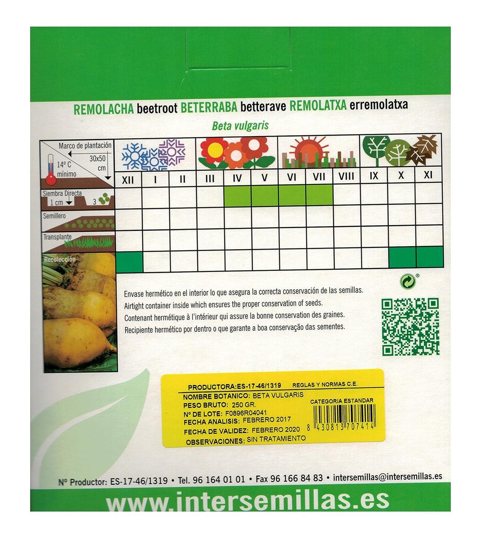 Semillas de Remolacha Forrajera Amarilla (Paquete de 250g): Amazon.es: Jardín