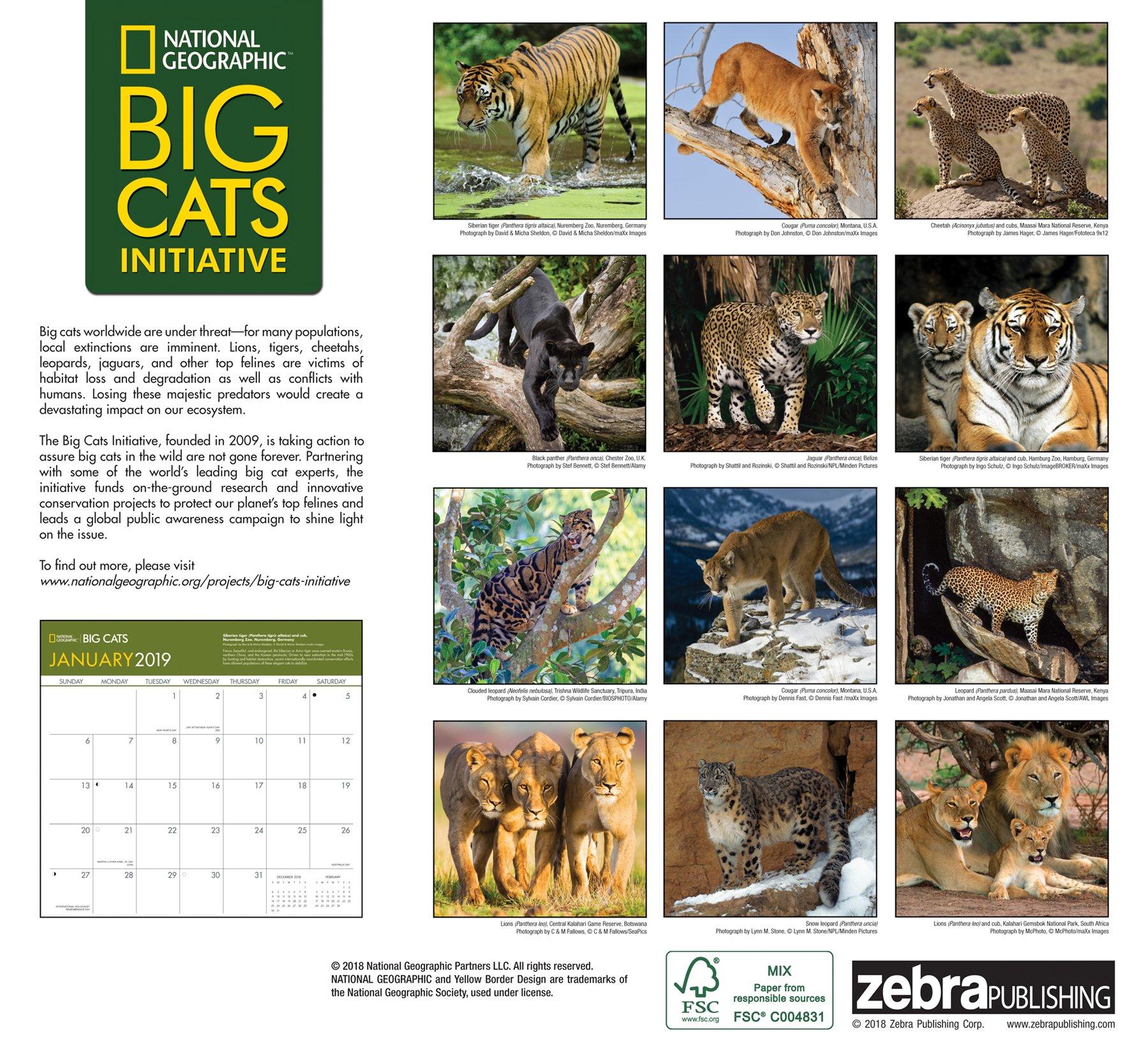 Calendario Tiger 2019.National Geographic Big Cats 2019 Wall Calendar Zebra