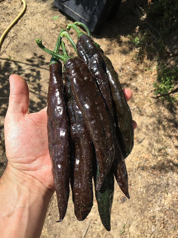 Carolina Reaper 120 Graines En 12 Variet/ès De Les Piment Chili Plus Piquant Du Monde Collection 1