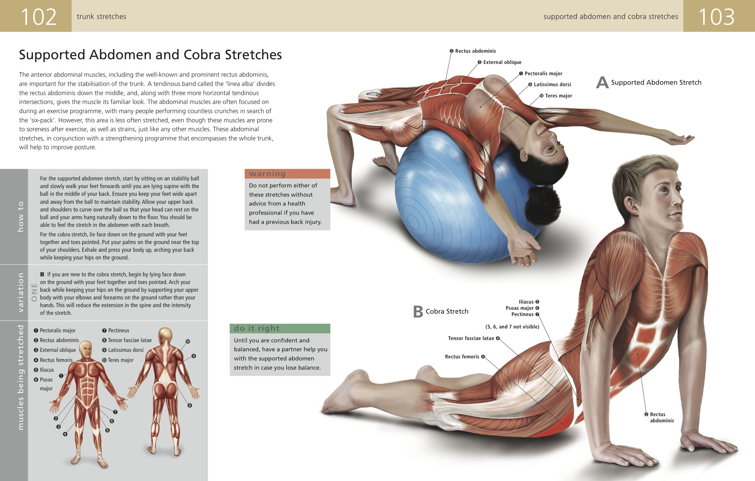 The Student\'s Anatomy of Stretching Manual: Kenneth Ashwell ...
