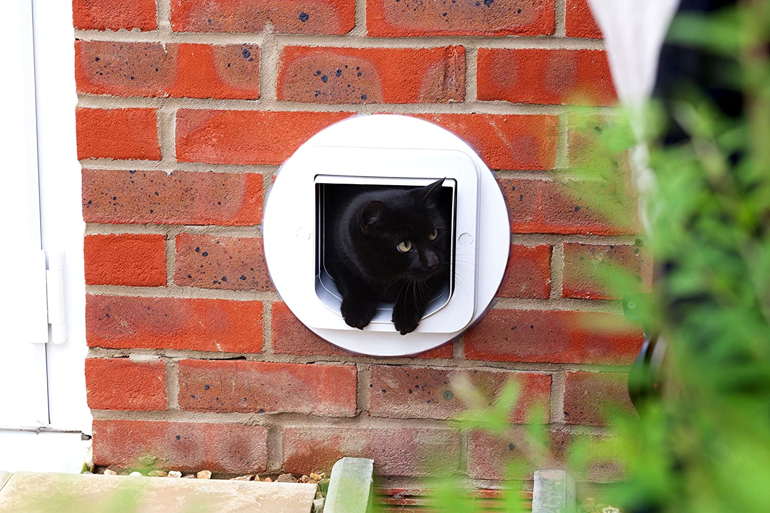 Appearance of SureFlap Microchip Cat Flap