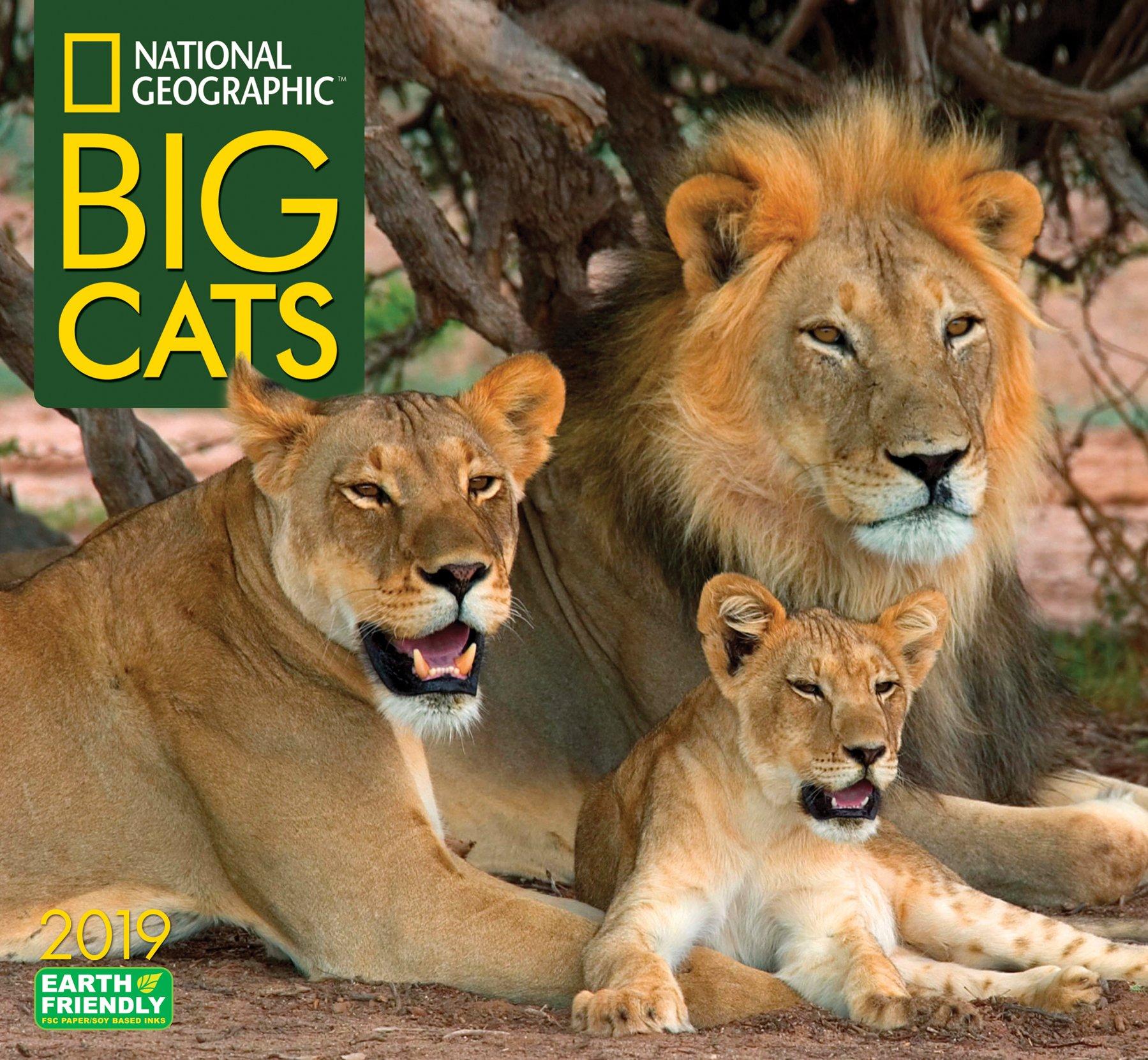 national geographic big cats 2019 wall calendar