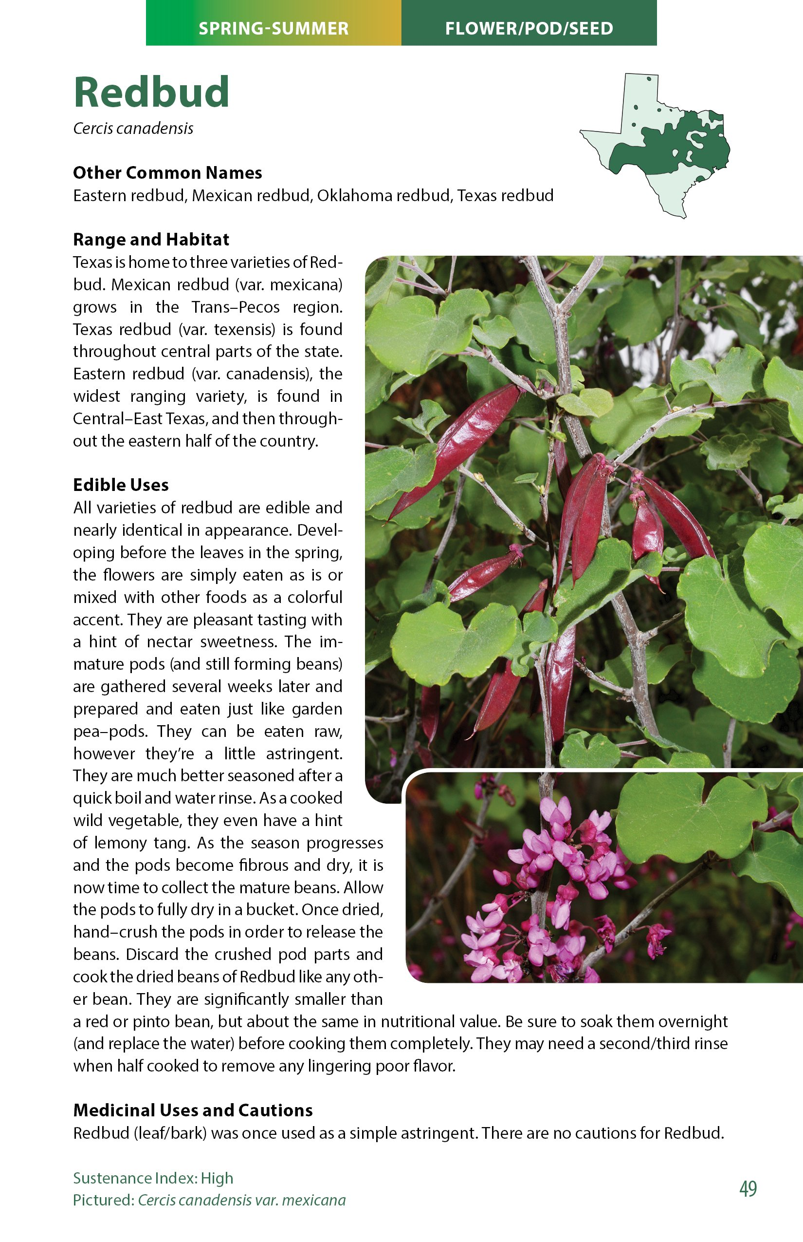 Wild Edible Plants of Texas: A Pocket Guide to the Identification ...