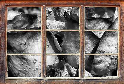Parete Dacqua In Casa : Monocrome gocce d acqua su petali di rosa finestre in d guardano
