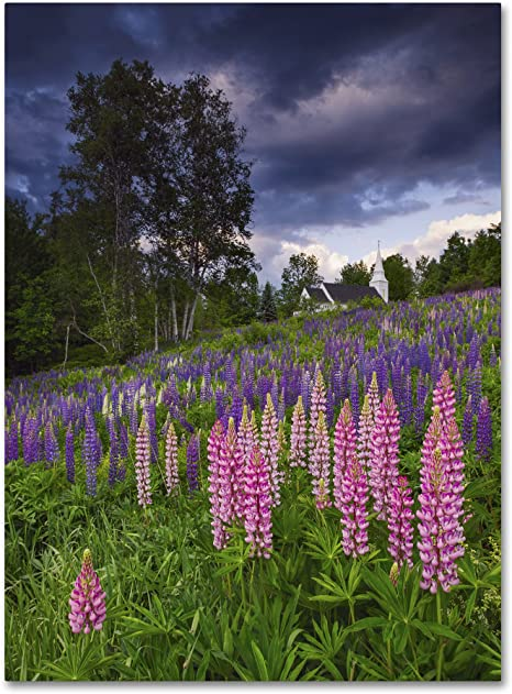 Amazon Com Lupines On The Hill By Michael Blanchette Photography 18x24 Inch Canvas Wall Art Posters Prints