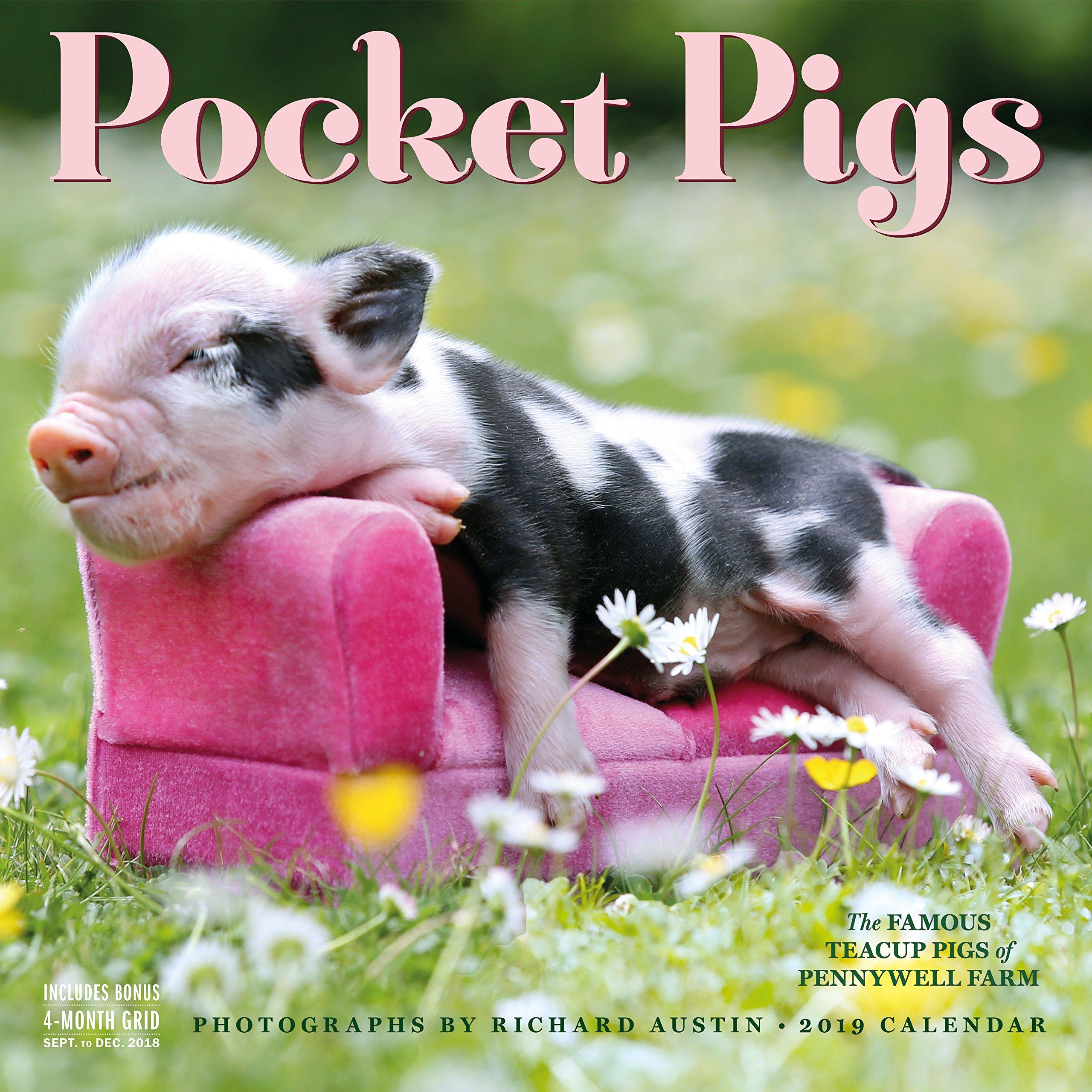 Famous pigs