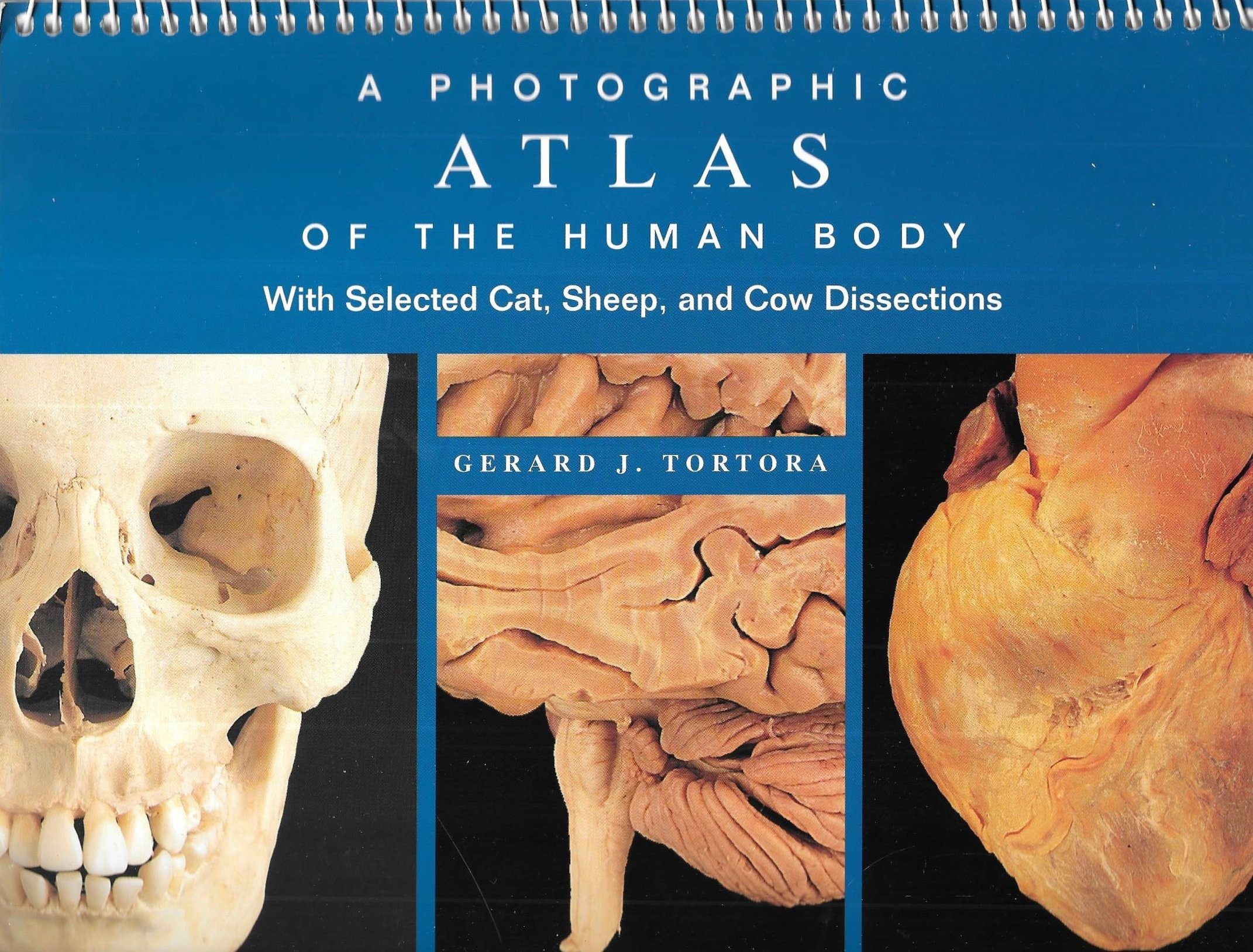 A Photographic Atlas of the Human Body With Selected Cat Sheep and ...