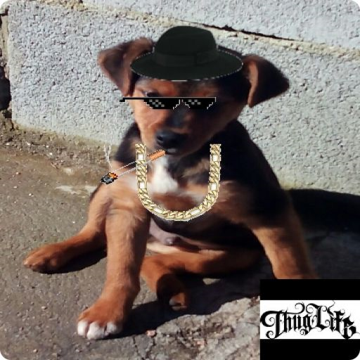 Thug Life Photo Editor Free - Dutch Von Sunglasses