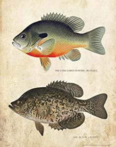 Apple Creek Antique Ice Fishing Lure Patent Poster Art Print Bluegill Black Crappie Bass Walleye Muskie Lures Poles 11x14 Wall Decor Pictures