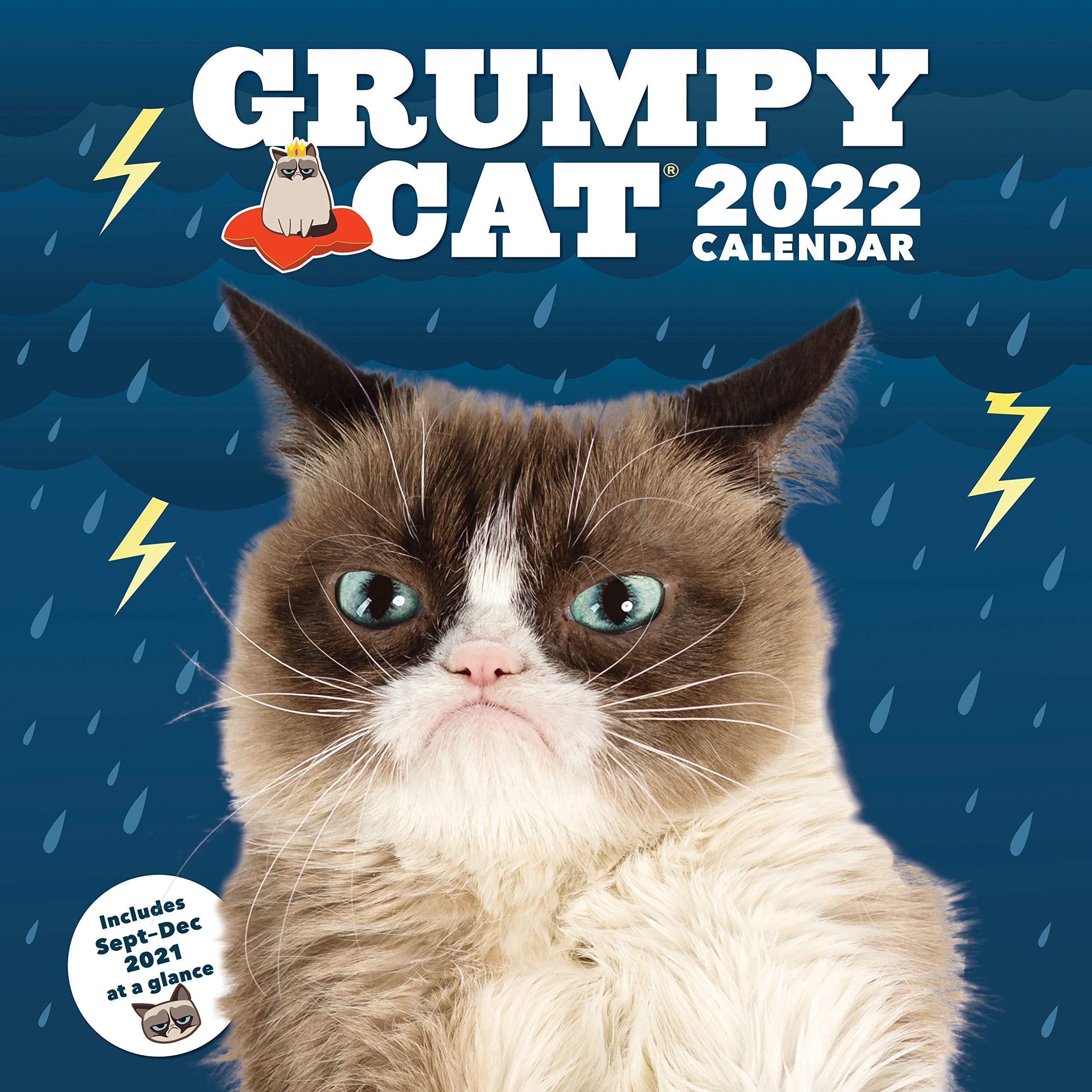 Grumpy Cat Calendar 2022.Amazon In Buy Grumpy Cat 2022 Wall Calendar Book Online At Low Prices In India Grumpy Cat 2022 Wall Calendar Reviews Ratings