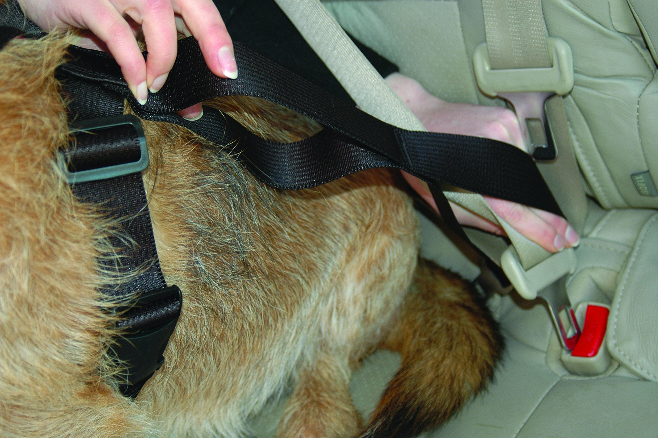 The Company of Animals - CLIX CARSAFE Dog Harness - Multi-Purpose Car Seat Belt and Walking Harness - Easy, Adjustable, Secure and Safe - X-Small by The Company of Animals (Image #5)