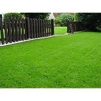 Rasen Sport und Spiel Grassamen Rasensamen Rasensaat Gras