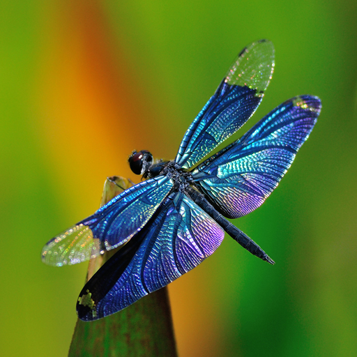 Amazon Com Dragonfly Wallpapers Appstore For Android