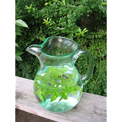 100 SPEARMINT SEEDS VERY FRAGRANT #1094 : Herb Plants : Garden & Outdoor