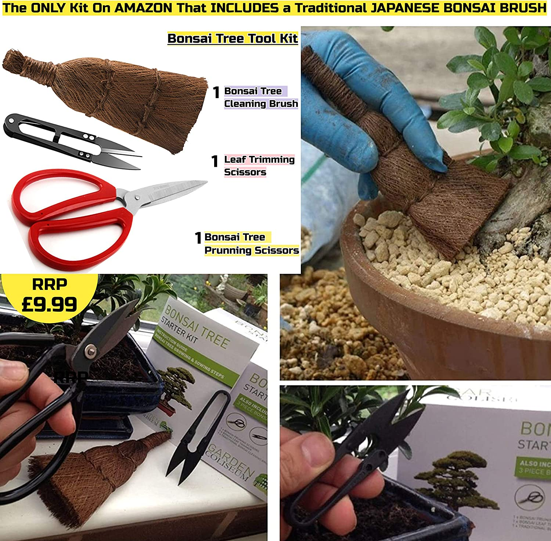 KIT BONSAI ¡CULTIVA TUS PROPIOS ÁRBOLES Kit de germinación bonsais ...