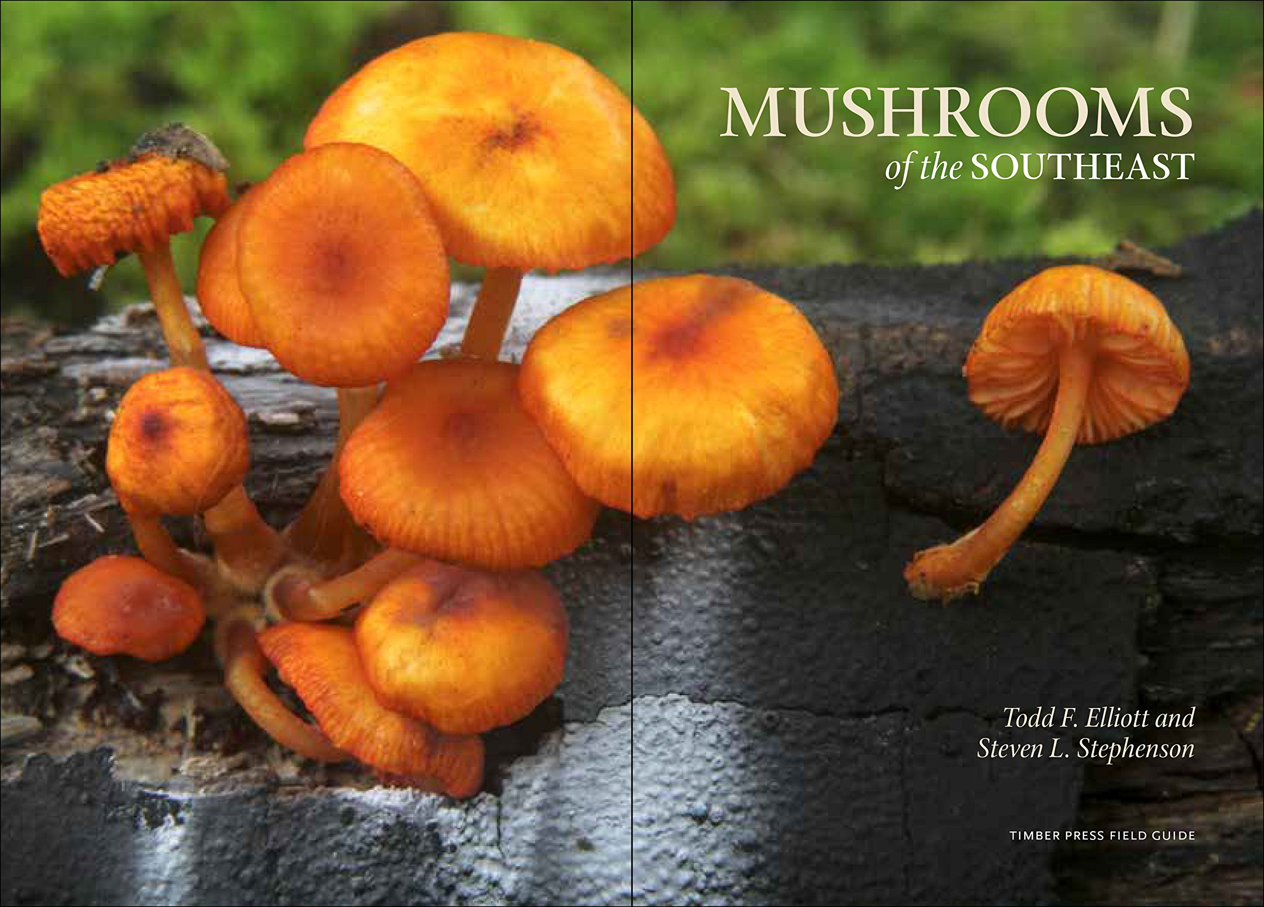 Mushrooms Of The Southeast A Timber Press Field Guide