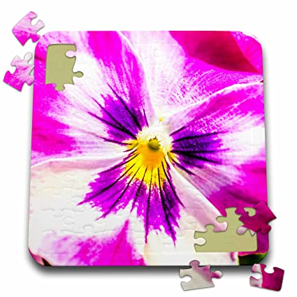 Amazon alexis photography flowers pansy pink and white alexis photography flowers pansy pink and white pansy flower macro 10x10 inch puzzle mightylinksfo