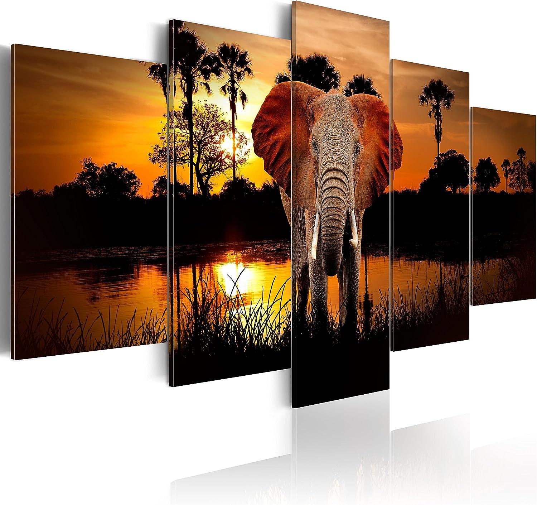 B/&D XXL murando Impression sur Toile intissee 100x50 cm 5 Pieces Tableau Tableaux Decoration Murale Photo Image Artistique Photographie Graphique Paysage Afrique Animal Animaux /él/éphant g-C-0024-b-m