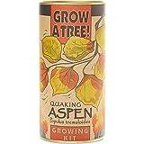 Quaking Aspen | Tree Seed Grow Kit | The Jonsteen Company