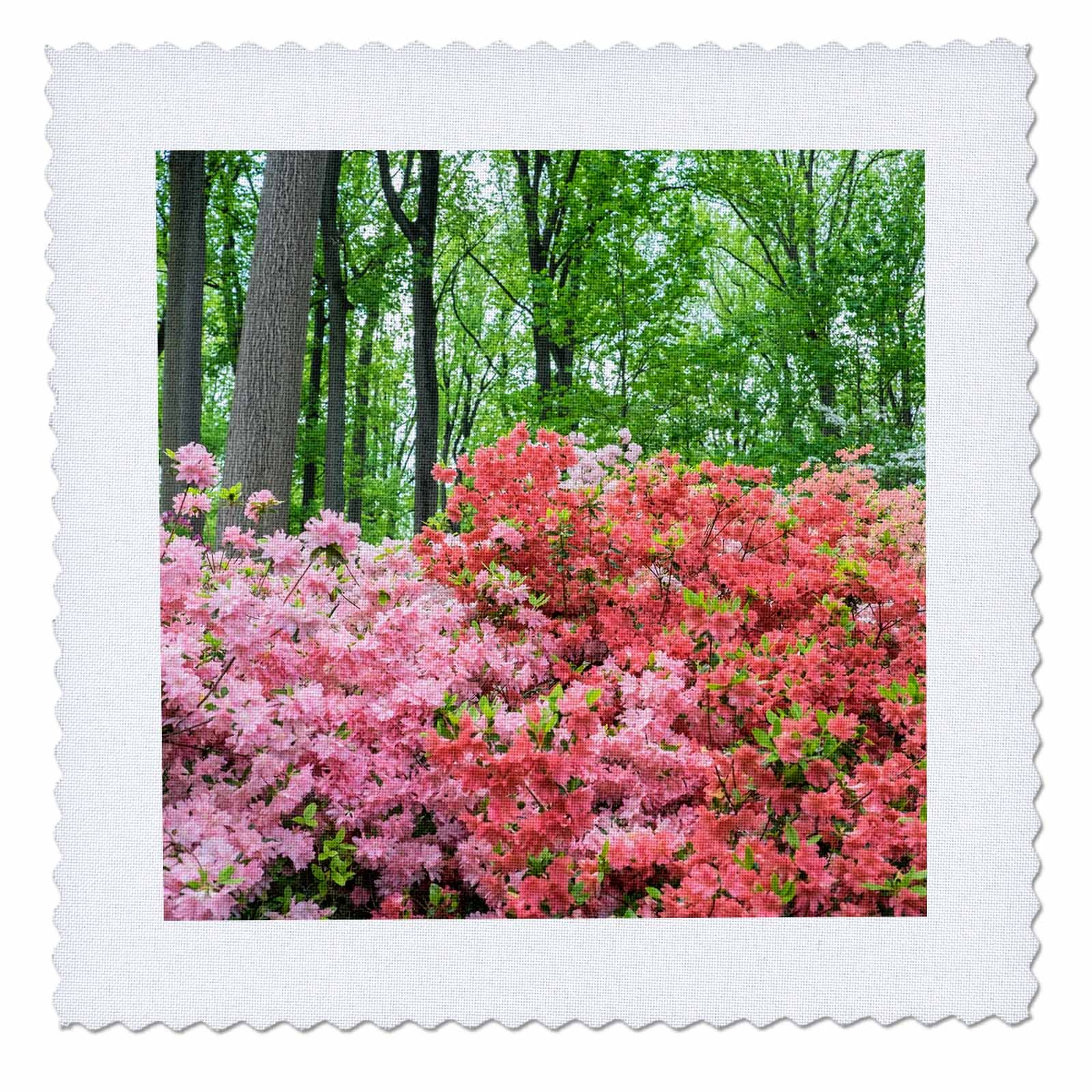 3dRose Danita Delimont - Forests - Azaleas blooming in the forest, Azalea Woods, Winterthur, Delaware - 12x12 inch quilt square (qs_278839_4)