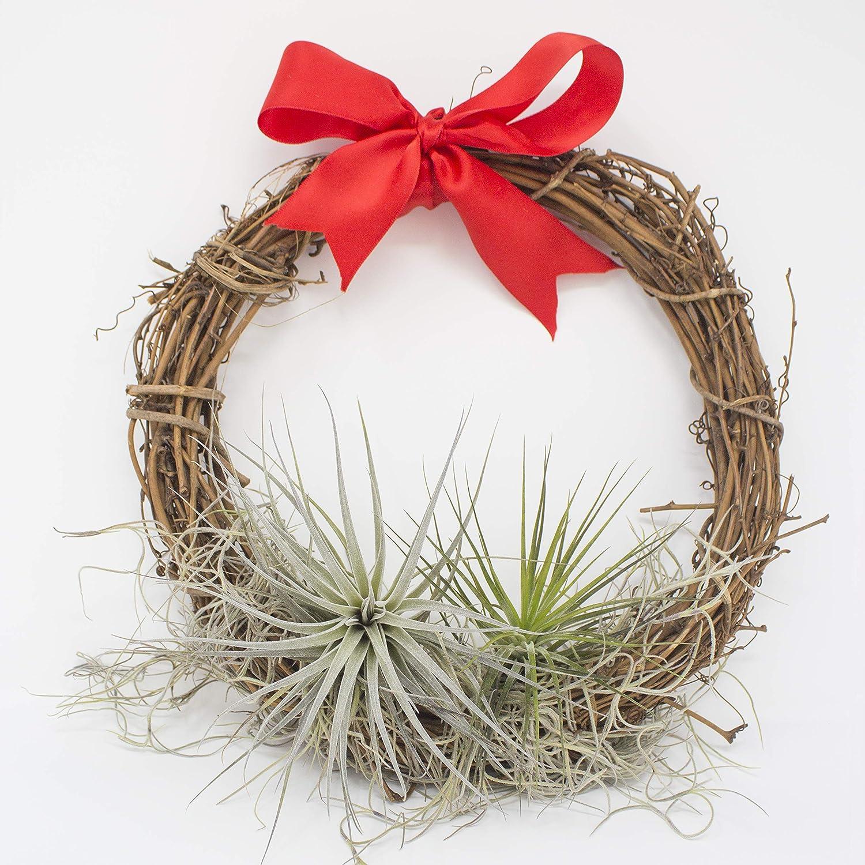 Amazon Com Plantaflor Usa Inc Inc Air Plant Christmas Wreath