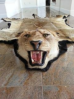 Lion Rug Mount With Felt Lining Finish
