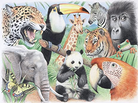 amazon com reeves water color pencil by numbers large jungle animals