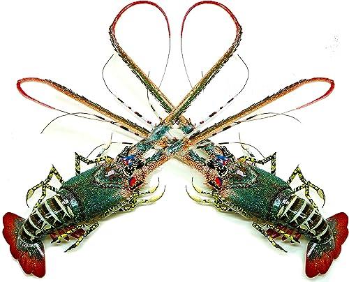 Aqualexs Bamboo King Lobster Shrimp Handmade Wood Art