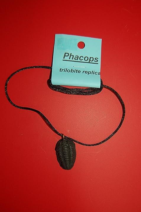 Amazon phacops trilobite pendant necklace toys games phacops trilobite pendant necklace mozeypictures Image collections