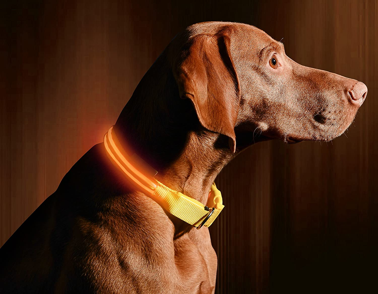 Bright orange X-Large (21.6 27.5\ Bright orange X-Large (21.6 27.5\ LED Dog Collar USB Rechargeable Available in 6 colors & 6 Sizes Makes Your Dog Visible, Safe & Seen