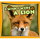 childrens books : I Wish I Were a LION (Great Picture Book for KIDS) Lion Books (Age 4 - 11) (Animal Habitats and Books…