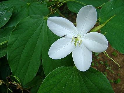 Garden Flowers In Kerala