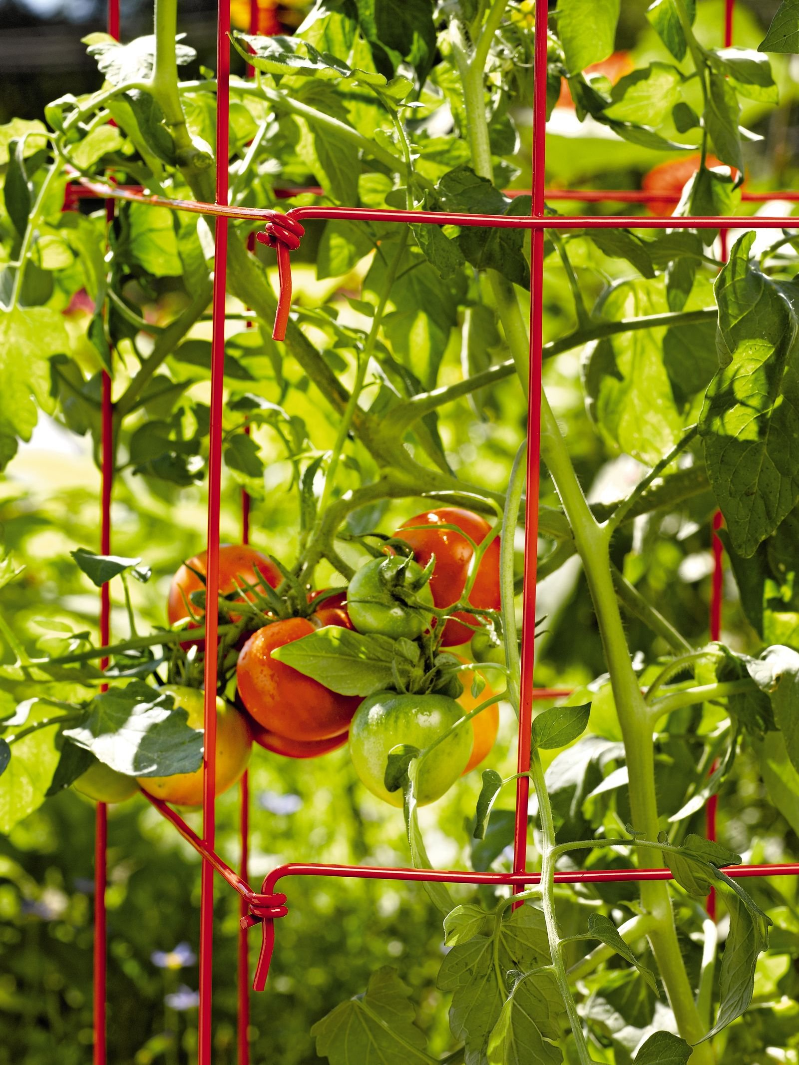 Gardener's Supply Company Square Heavy Gauge Extra Tall Tomato Cage, Set of 2, Red