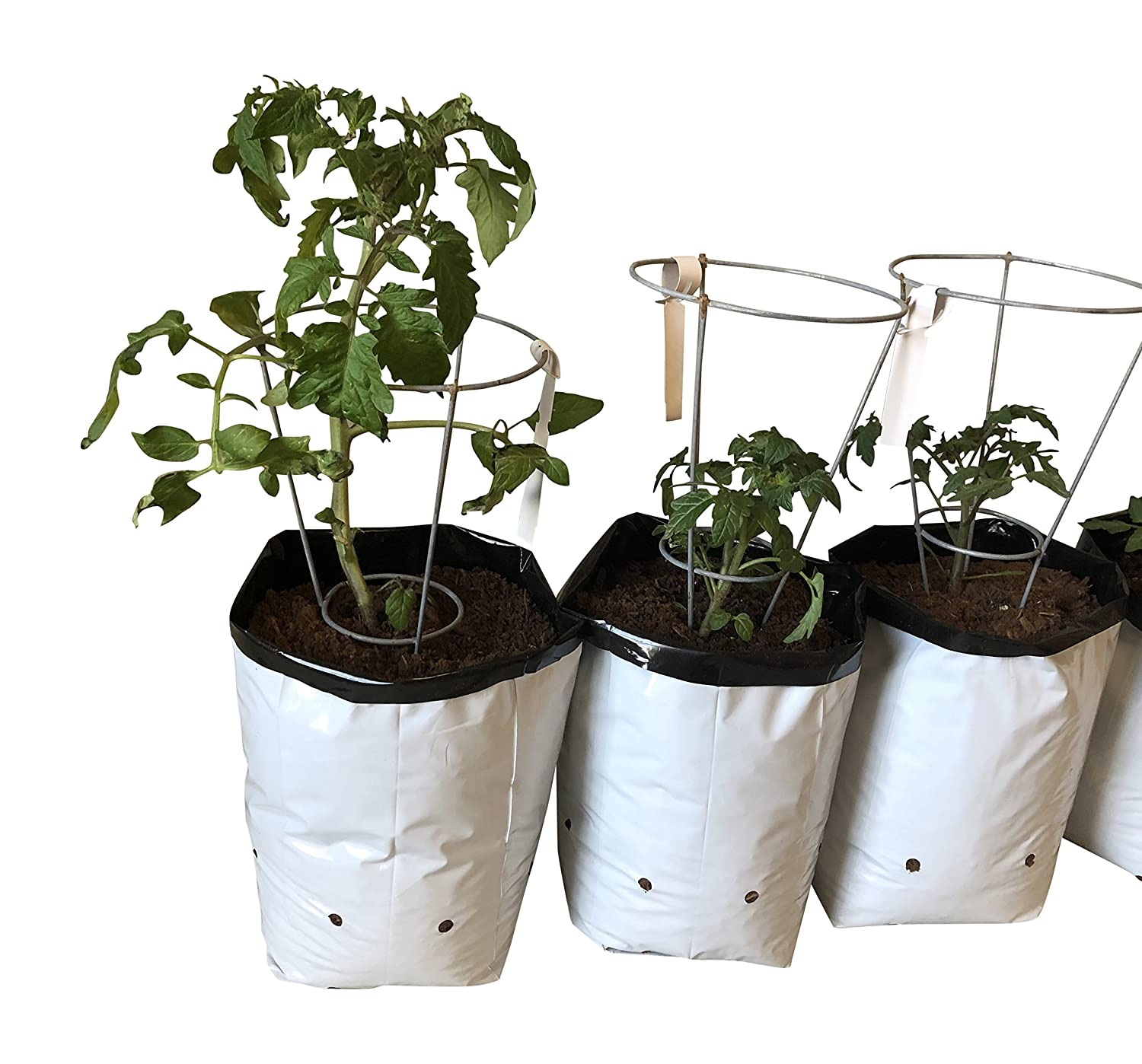 Amazon.com : Small Plant Garden Starter Kit- Mini Wire Tomato ...