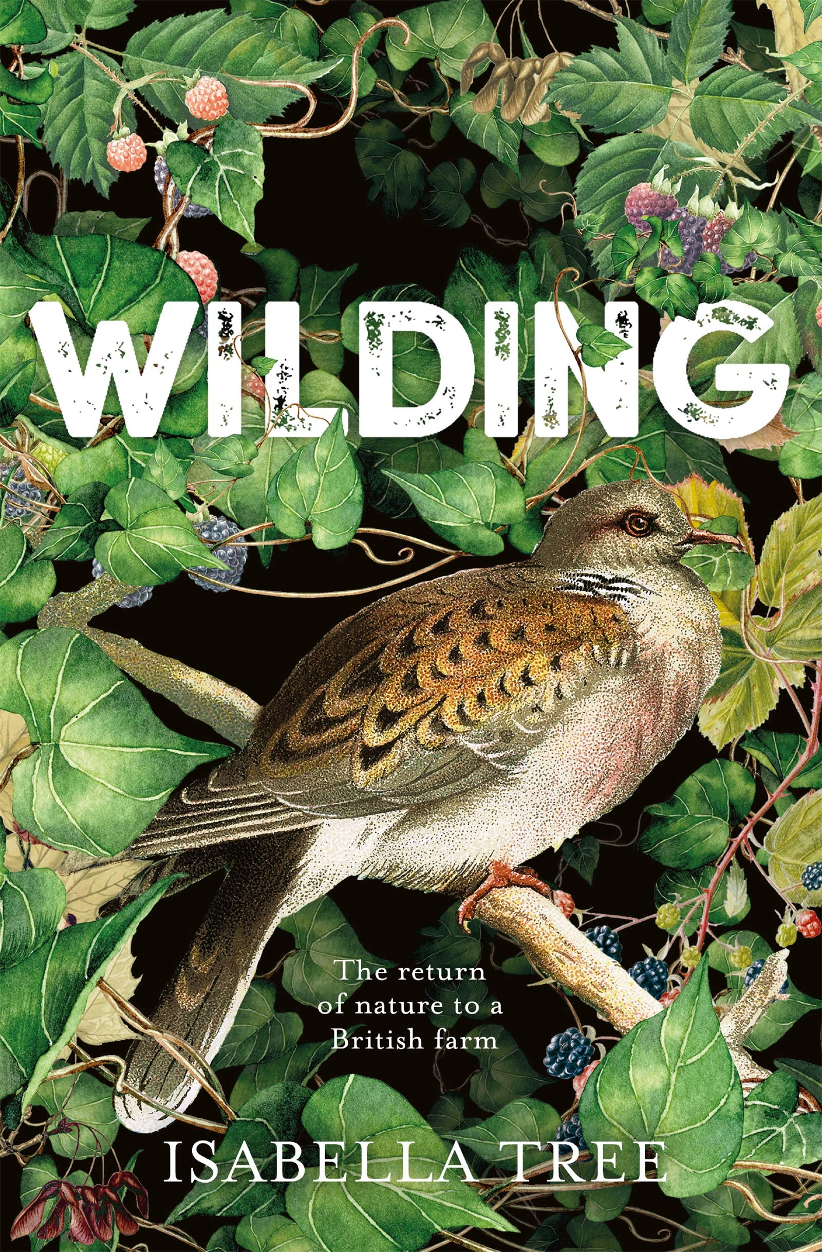 Image result for wilding by isabella tree book