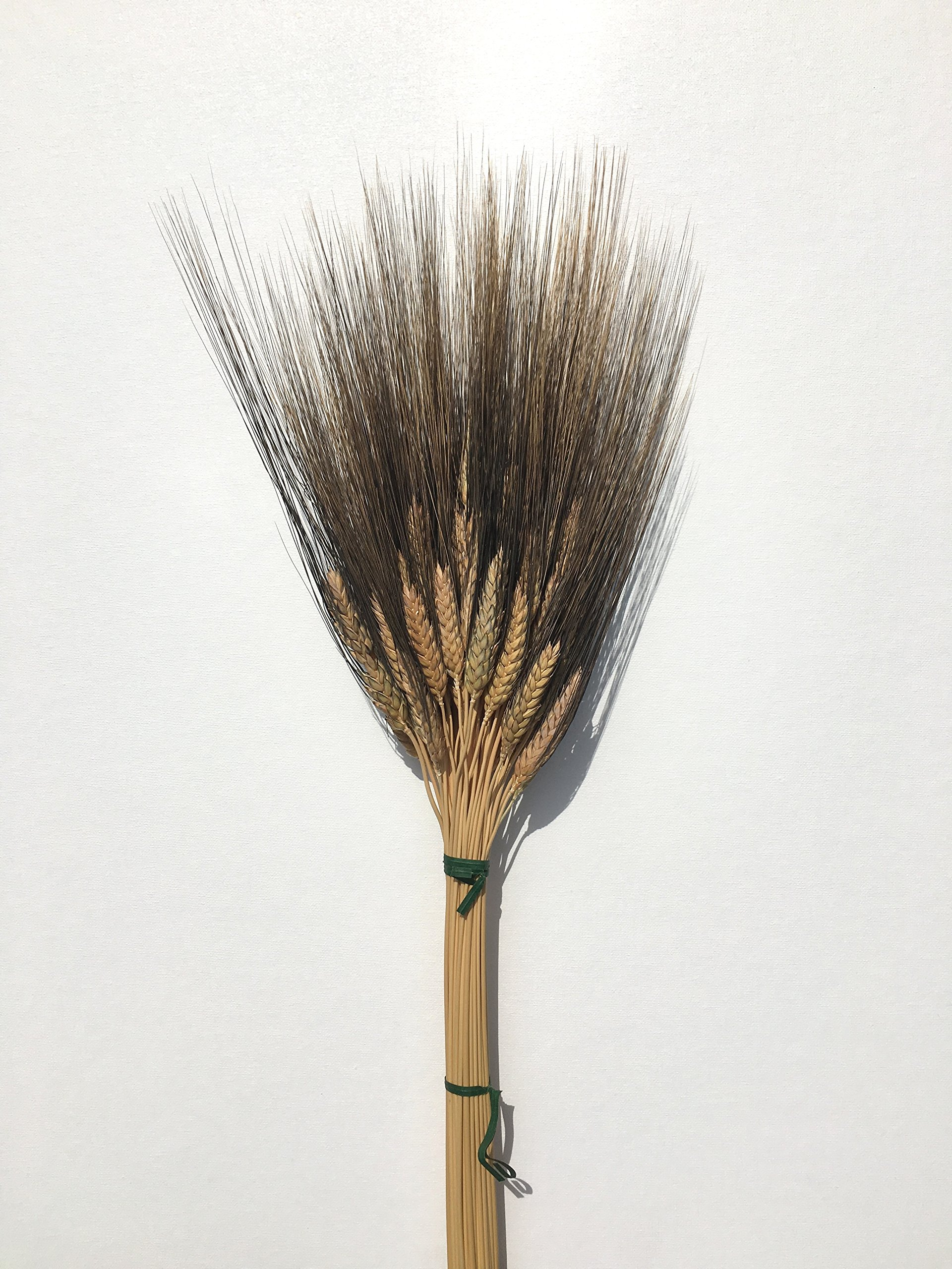 Natural black beard wheat stalk - 35 inch tall