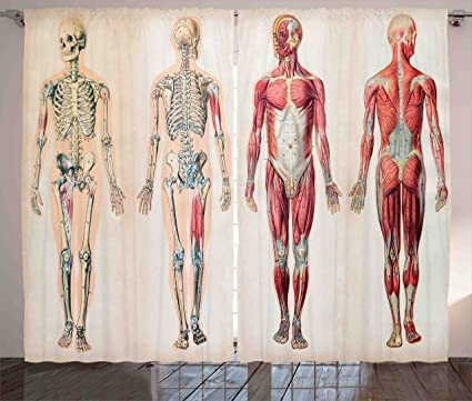 Anatomía Humana cortinas por Ambesonne, Vintage Gráfico de cuerpo ...
