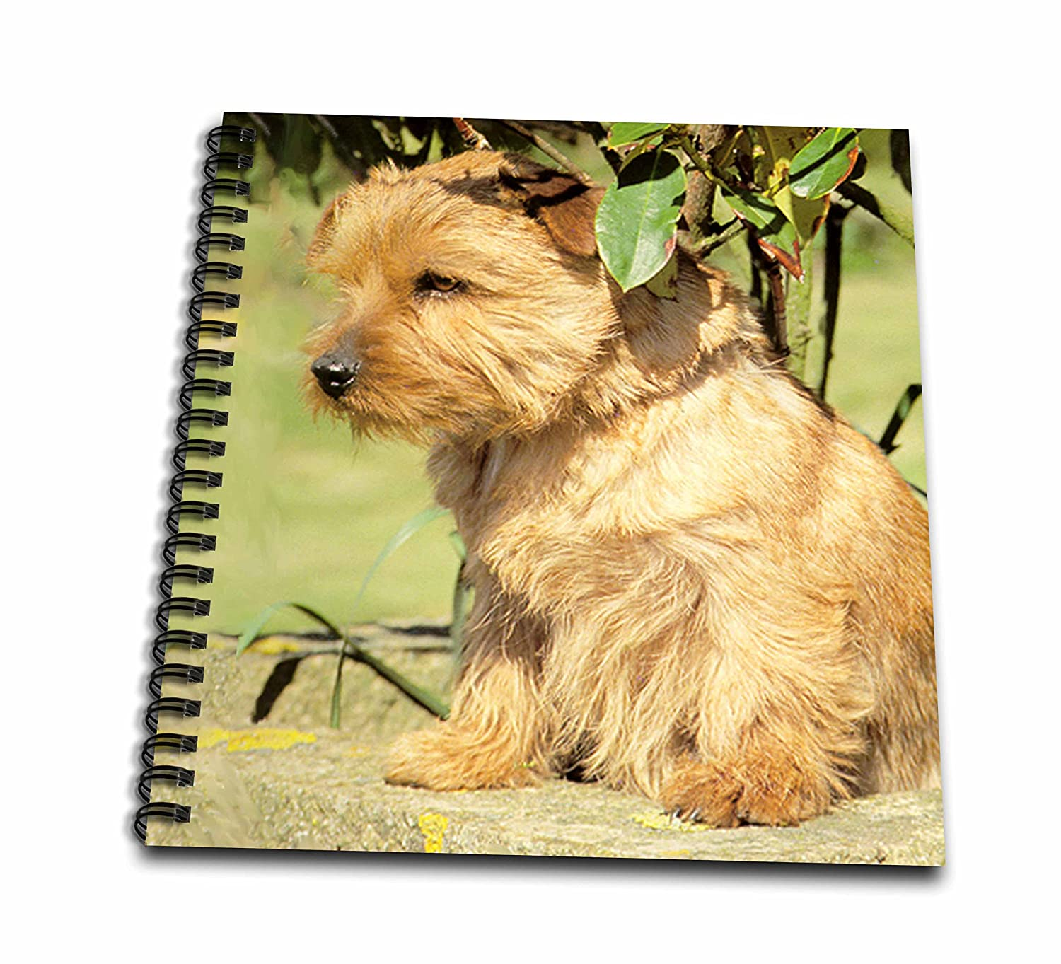 8 by 8-Inch 3dRose db/_493/_1 Norfolk Terrier Drawing Book