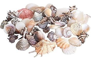 Diseño Grande De Conchas Decorar Kg Tropicales Bolsa 1 Baños Mar Interior Casa LSUMqzGVp